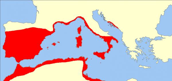 Map habitat range quercus suber or cork oak