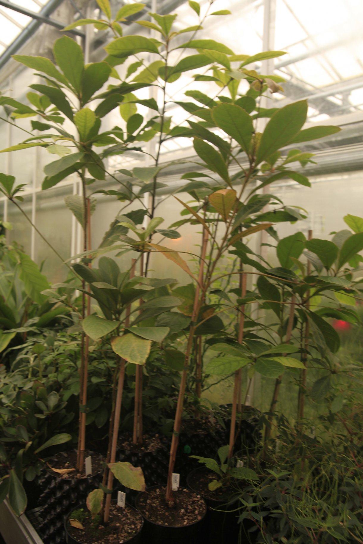 Seedlings Ackroyd Amp Harvey Conflicted Seeds Spirit